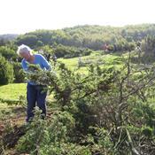 Naturpleje og -genopretning