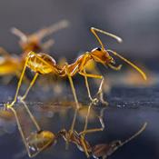 Myrernes forunderlige verden